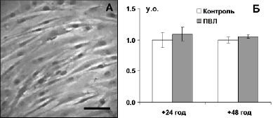 Вплив ПВЛ in vitro на життєздатність ММСК